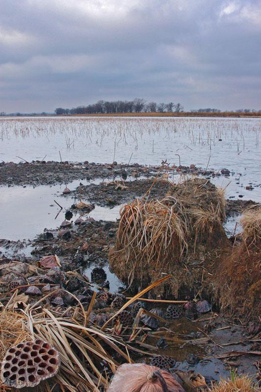 12 апреля 2008 г., озеро лотосов на юге Хабаровского края