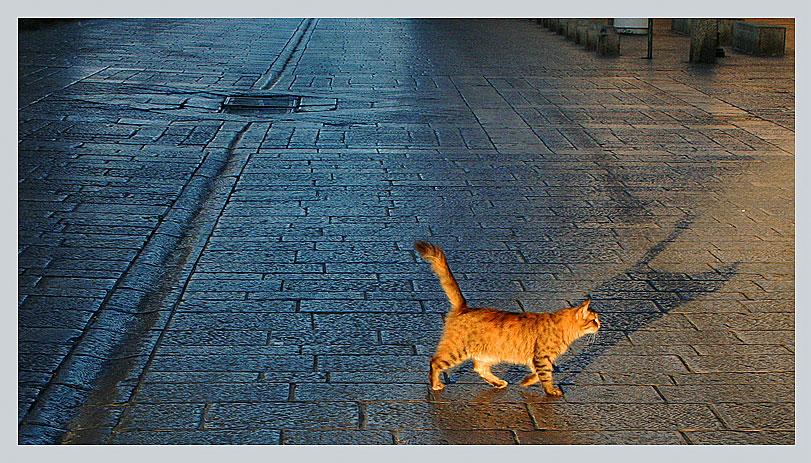 утреняя прогулка в Иерусалиме