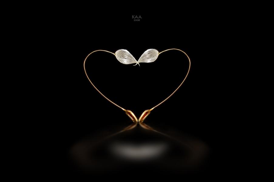 одуваны вода зеркало золото поцелуй