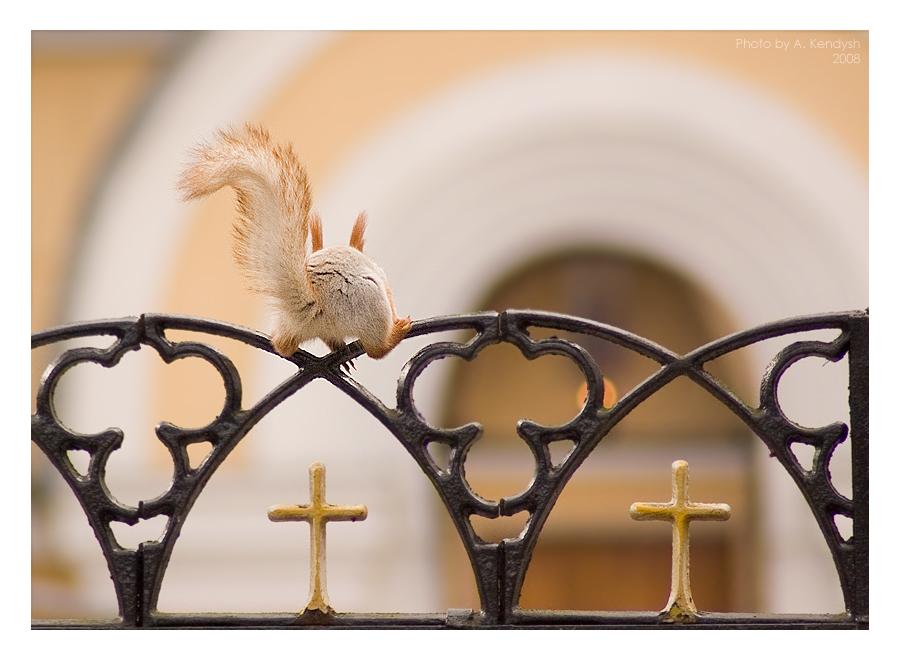 Беларусь г. Гомель парк имени Луначарского ограждение собора Петра и Павла