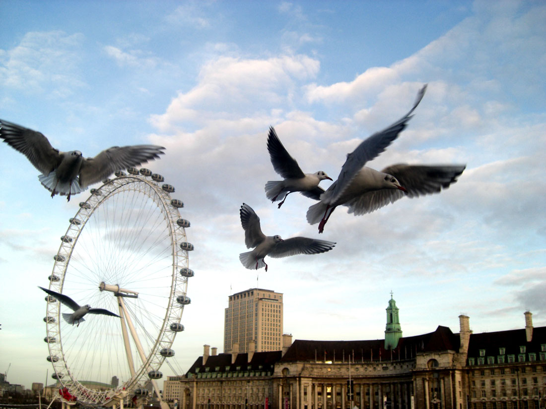 It was cold, it was really cold , i cant remeber it was december of 12th or somthin like that , i was goin to the next side of westminister and i took my cam bythe way just took this nice movements of the Seagulls :)  i was jsut wondered that the ISO was so good of that pic :)
