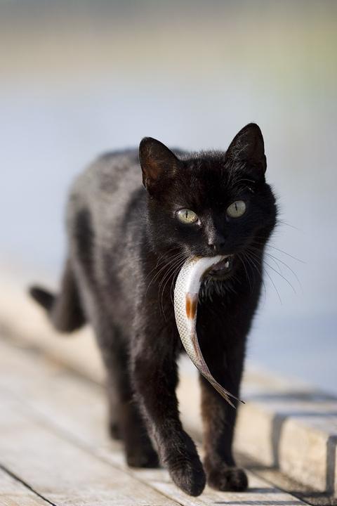 Это Селигер. Кот местный, таскал потихоньку рыбу из моего ведра. Был застукан...