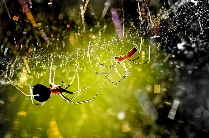 Дал жизнь, вскормил и научил всемуОтец-паук сыночка-паука,Все лучшее он отдавал ему.Сын благодарно скушал старика...
