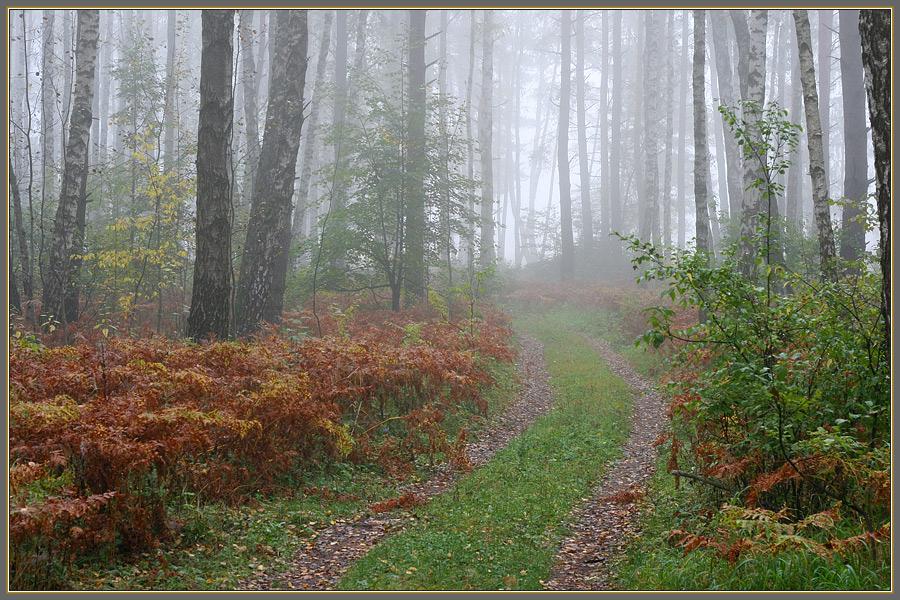 лес осень туман