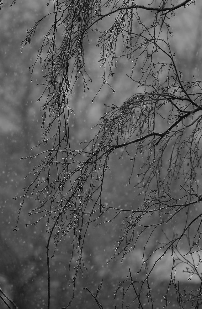 Снег, снег... всего лишь снег...