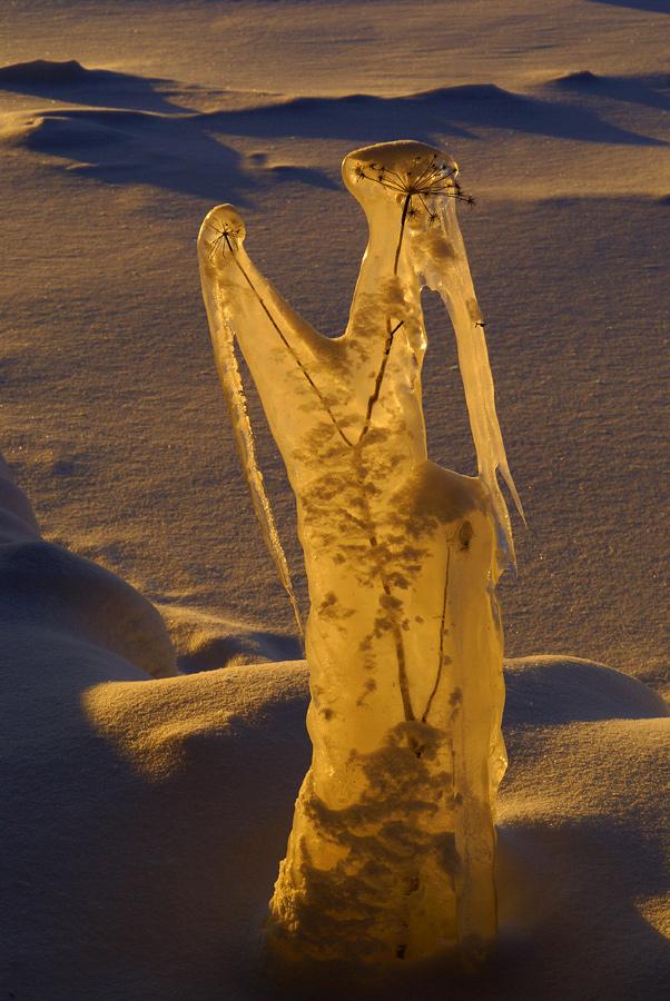 ...пока не поучаствовала в конкурсе одежды от зимних кутюрье...