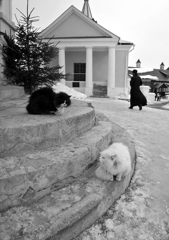 снято в Саввино-Сторожевском монастыре