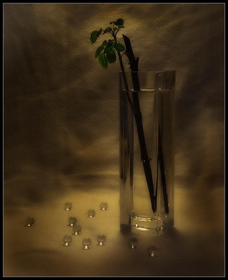 натюрморт стекло росток ваза