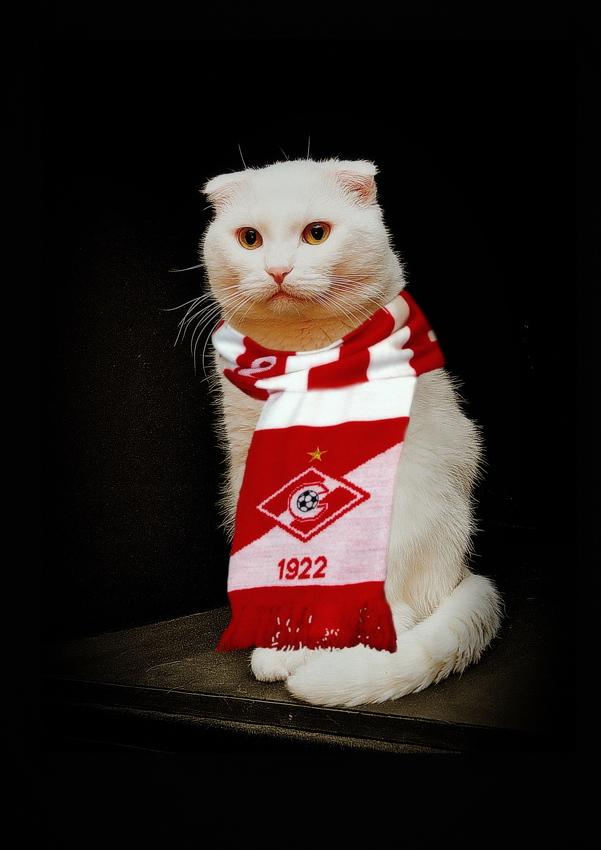 Британская длинношерстная кошка.Фотографии породы кошек ...