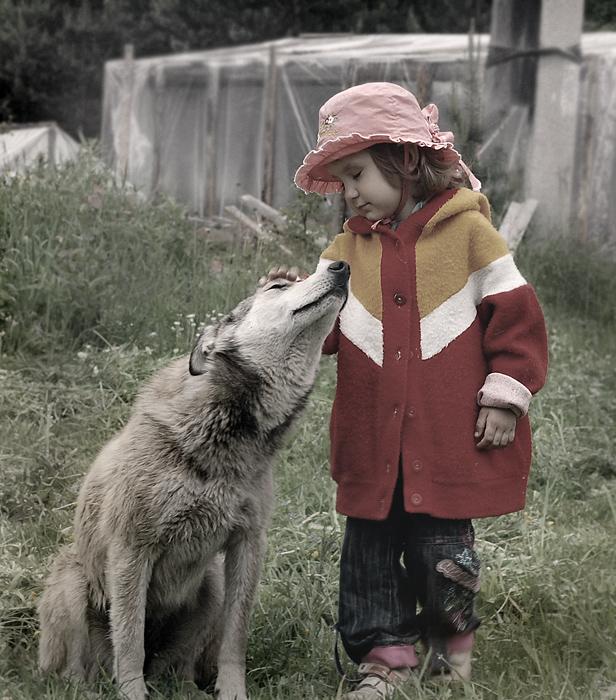 Сельские хроники... или Красная шапочка и серый волк...