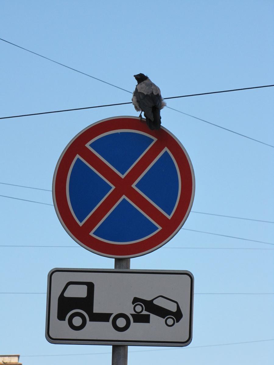дорожные знаки,ворона