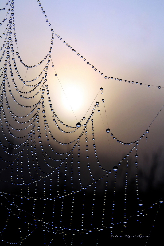 Волшебство утра, усыпанное нерукотворными алмазами..., свой любимый мир капелек дарю ВСЕМ ВАМ!