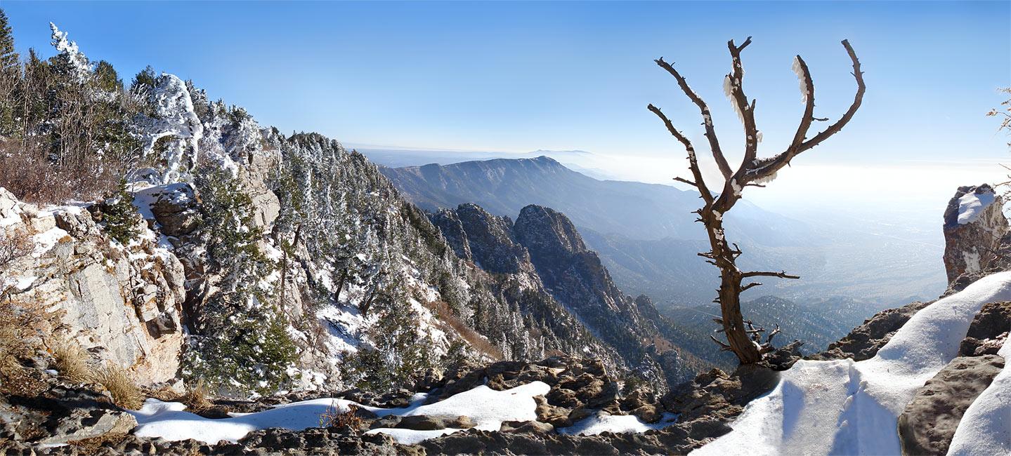 Панорама - горы - снег - дерево