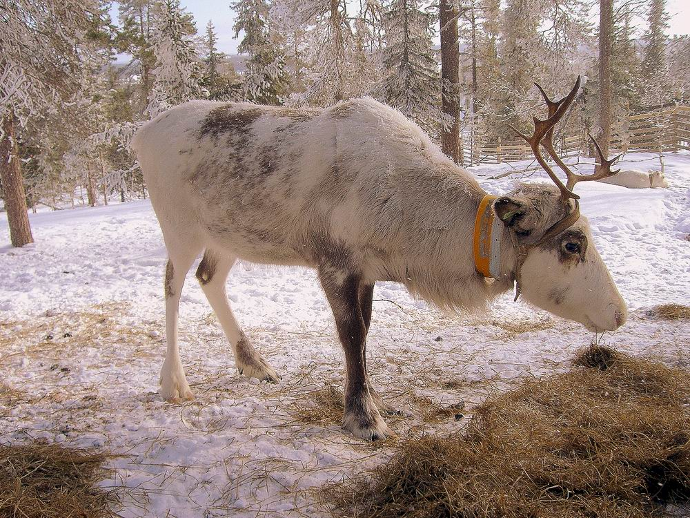 конец марта 2009 года..Ruka_Kuusamo.Finland.