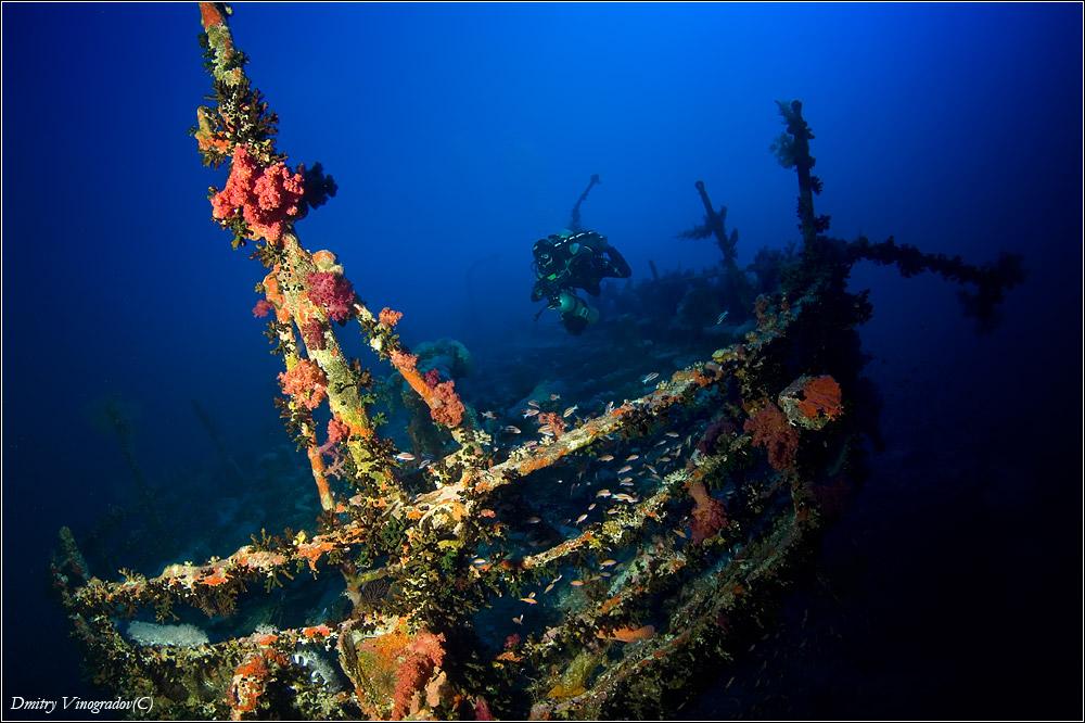 Красное море. Остров Big Brother. Затонувшее в 1957 году судно Аида. Глубина 60 метров. Воздух. Модель - Сергей Навроцкий.