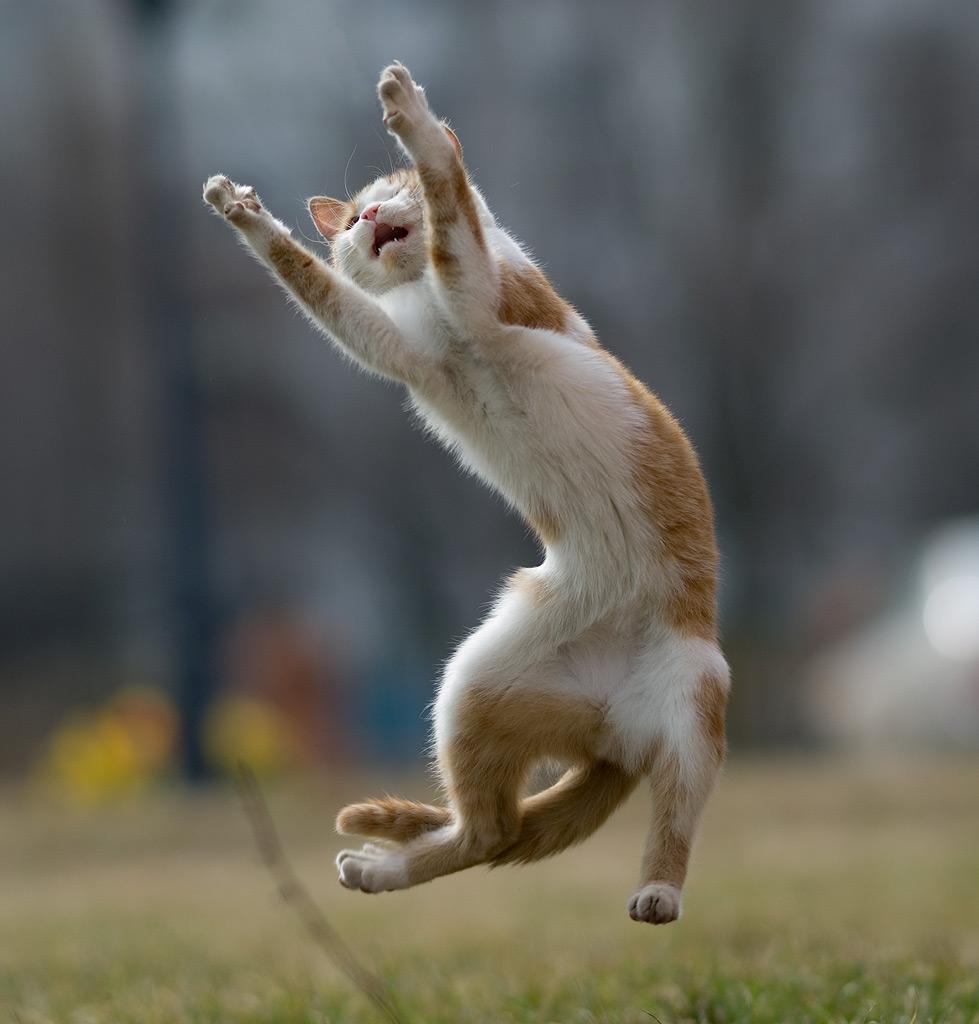 уличный кот,случайный снимок