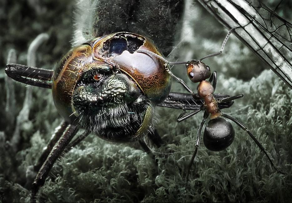 жизнь и смерть.муравей и стрекоза