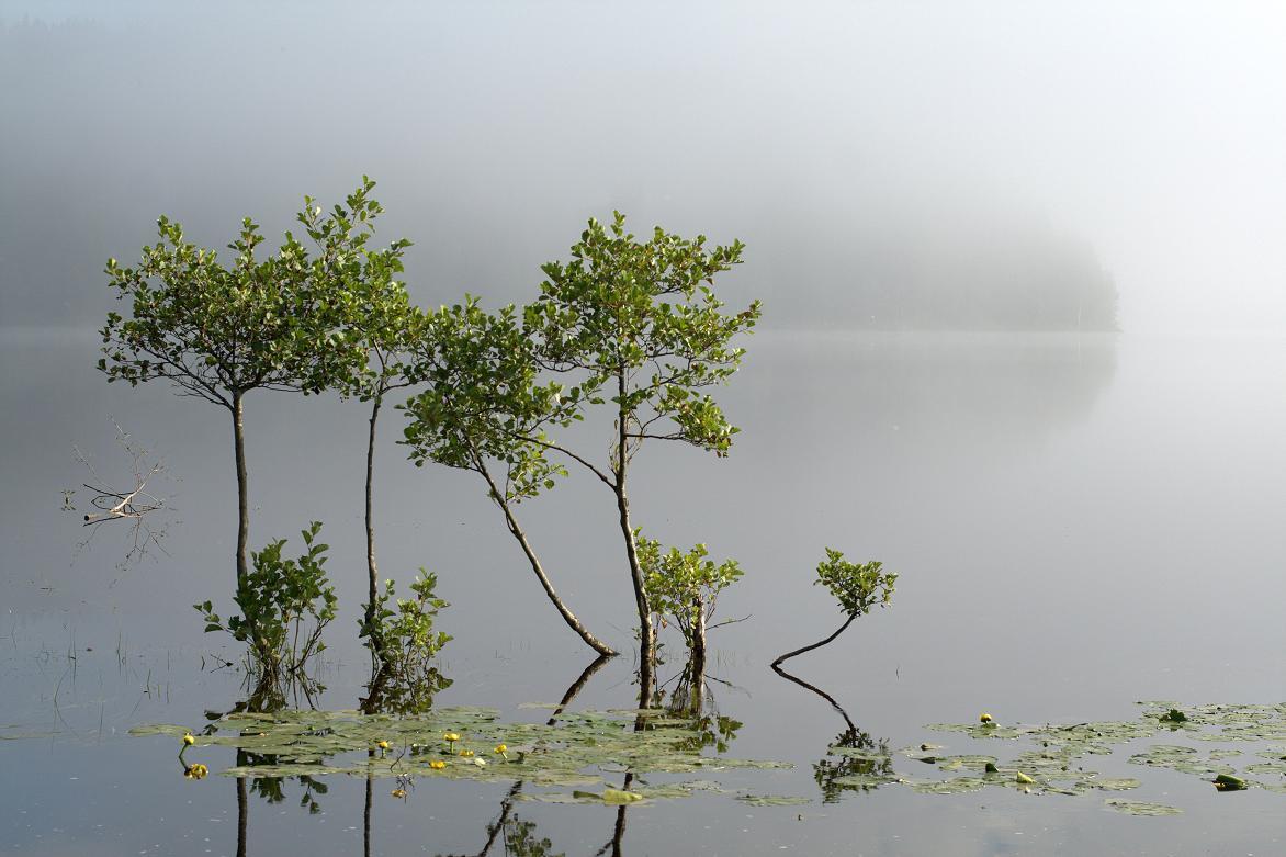 """Это фрагмент работы """"Всё пройдёт, и печаль, и радость...""""Озеро. Лето. Швеция. Nina Hagen. int333"""