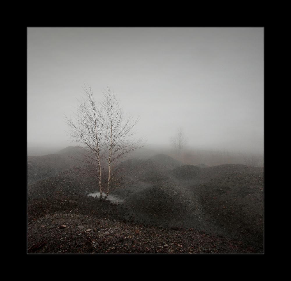 террикон, осень, туман