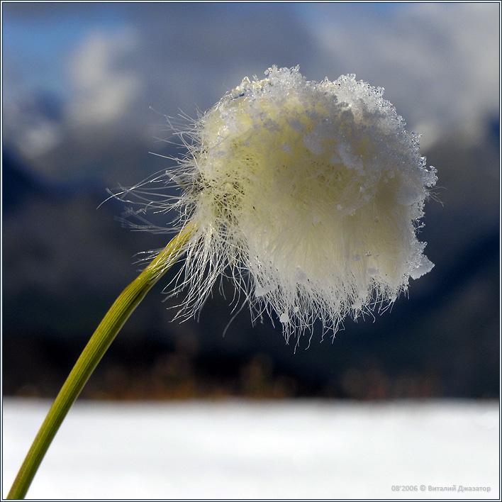 Зимой и летом в шапке и под снегом ?! :-) Фотографии Алтая - http://altai-photo.ru/