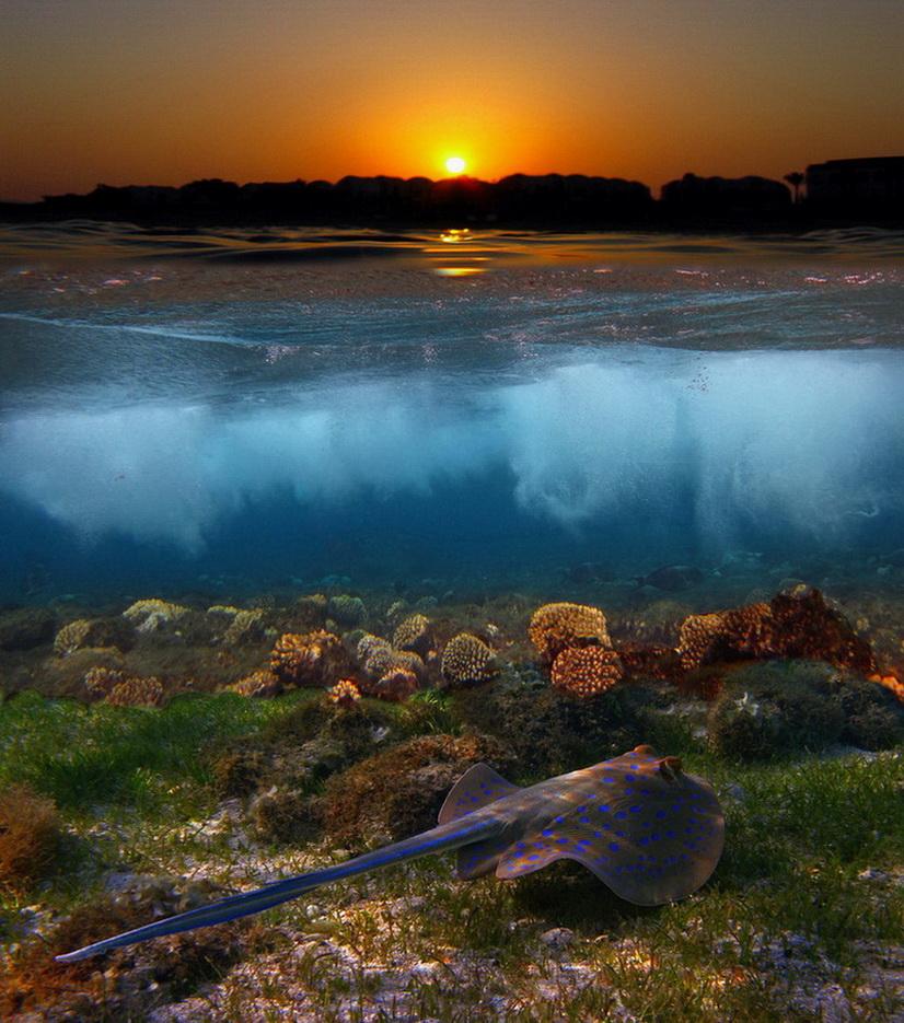 """""""Догорает солнце, рассыпает жар,На море и в небе плещется пожар.Золотая тропка к берегу бежитИ, в волнах купаясь, на ветру дрожит...""""СКАТ- ХВОСТОКОЛ, Красное море"""
