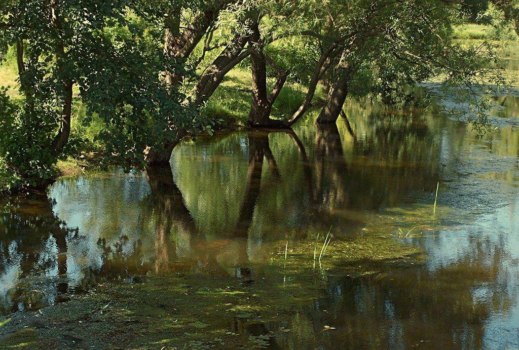 Жаркий июль на московских речках
