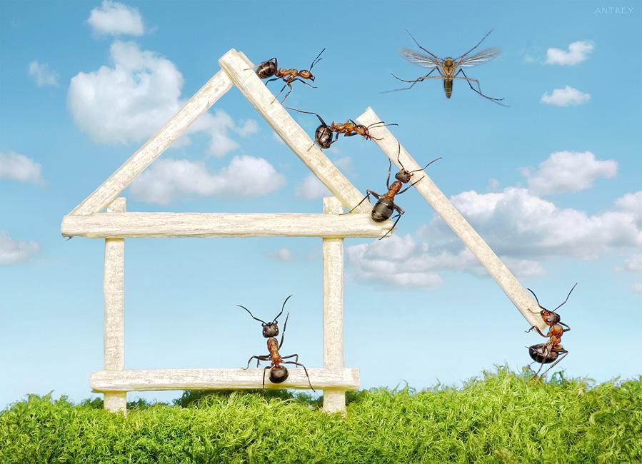 комарик настоящий...постоянно едят беззащитного макрушника и смазывают кадры...этого стирать не стал - пусть будет типа строительная авиация...небо вшоплено, слышал, что в сказках разрешили ;))
