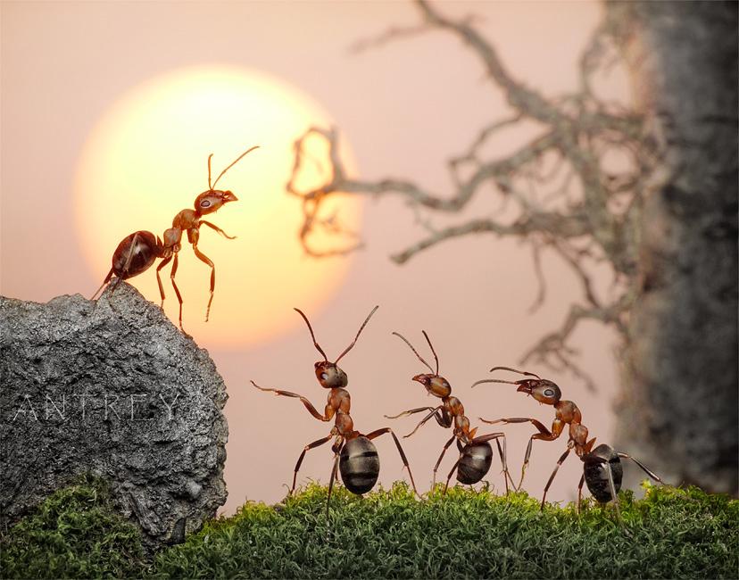 """муравьи умеют принимать решения самостоятельно, но предпочитают делать это коллективно... феромон """"общий сбор"""" исполняется так же незамедлительно, как и """"занять оборону"""", и """"кормить царицу"""""""