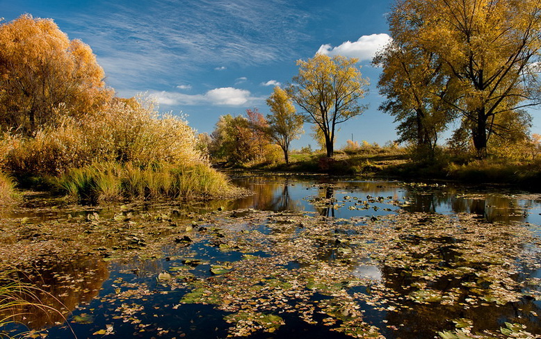 осень днепр киев природа река облака