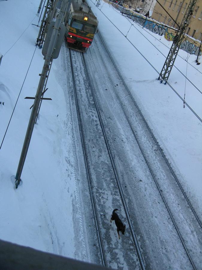 истерические беспорядочные гудки заставили глянуть вниз: собака нахально бежала между рельсами, поезд тормозил.  кадр один - дальше собака убежала под мост. выравнивать не стала, потому что собаке некуда будет бежать, и поезд срежется по красную полосу (но не уверена, что решила правильно.)
