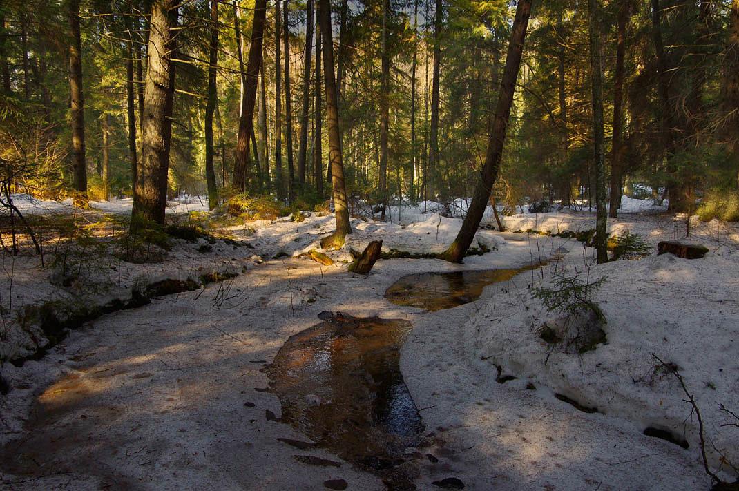 ...В лесу шизеют птицы.Земля почти совсем уже видна.Искрится воздух. Снег почти струится.В лесу весна...!