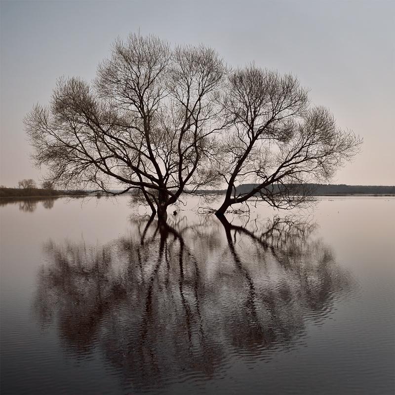 весна, разлив, вода, деревья