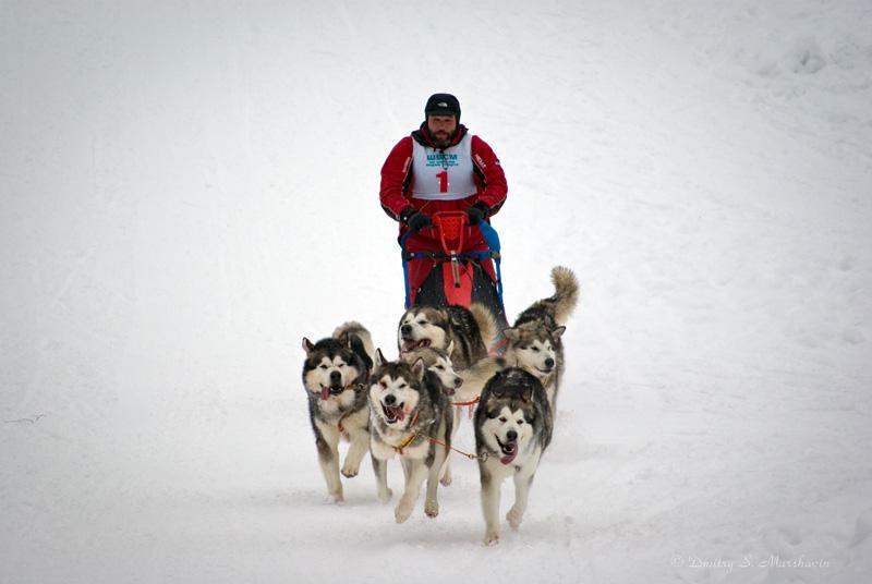 ЧиПР по ездовому спорту, спринт-класс, шестерка. Репортаж здесь: http://www.marshavin.com/?p=1785