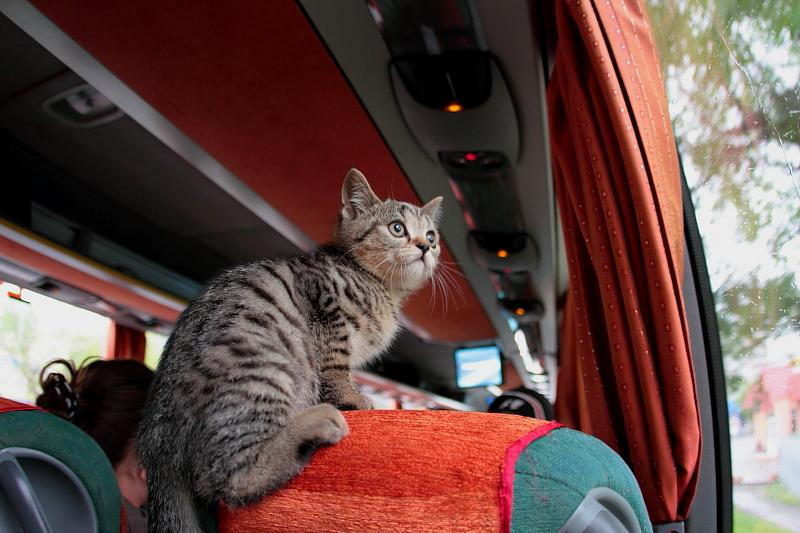 Кошка, которая гуляла сама по себе)))