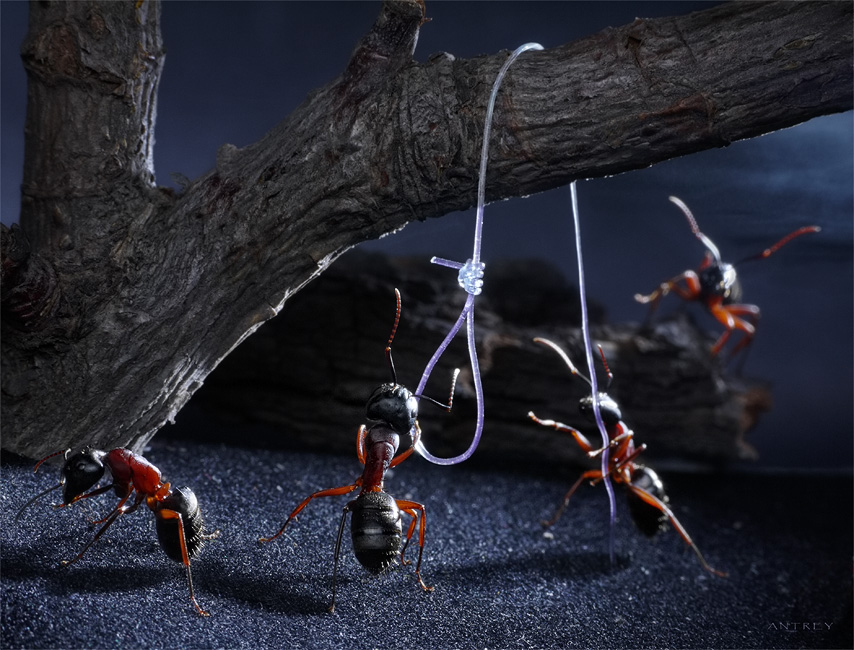 муравьи человечны, они нежны с детьми, кормят пенсионеров и казнят отступников (например, за утрату запаха родного муравейника)