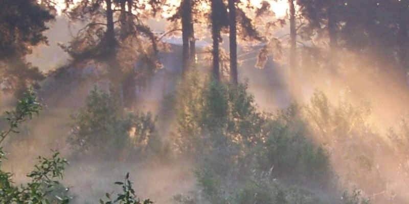 Утро, лучи, туман