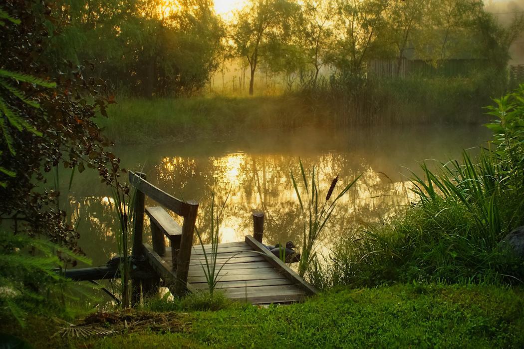 утро ,рассвет,пруд,деревня,туман