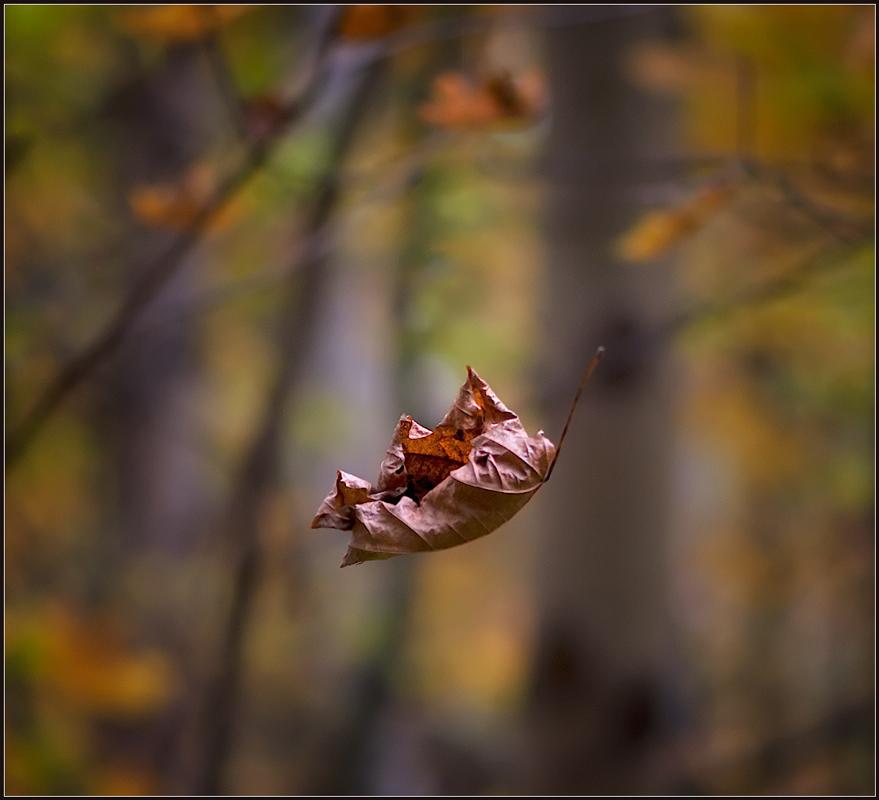 С ветки падающий листВ день осенний золотистОн по воздуху кружитсяИ танцует как артист...