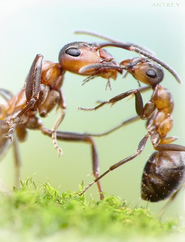 жизнь подарила мне и тебе(с)представьте сотню тысяч глоток, распевающих эту песенку на куполе муравейника)... муравьи относятся к Матери с большим уважением и любовью