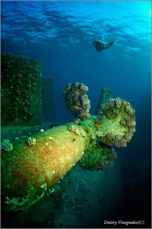 Красное море. Сафага. Погибший на рифе сухогруз Посейдония.