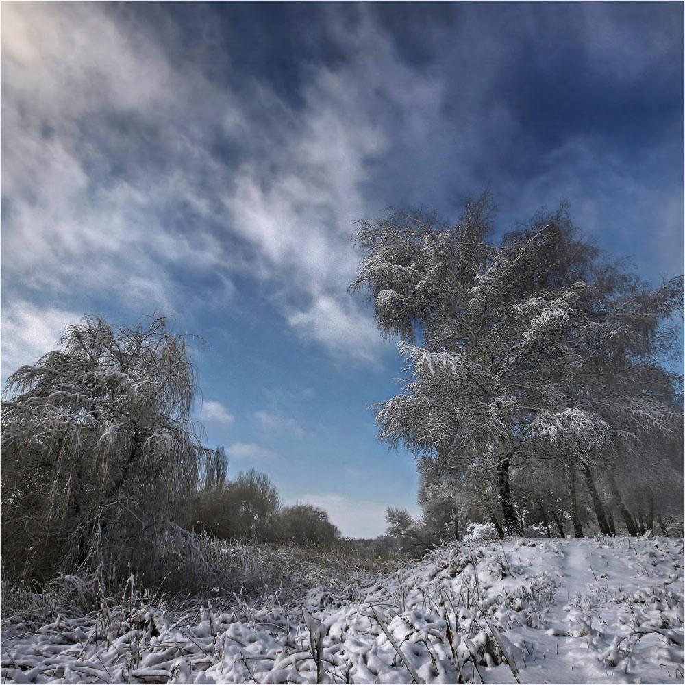 зима, снег, берёза, январь