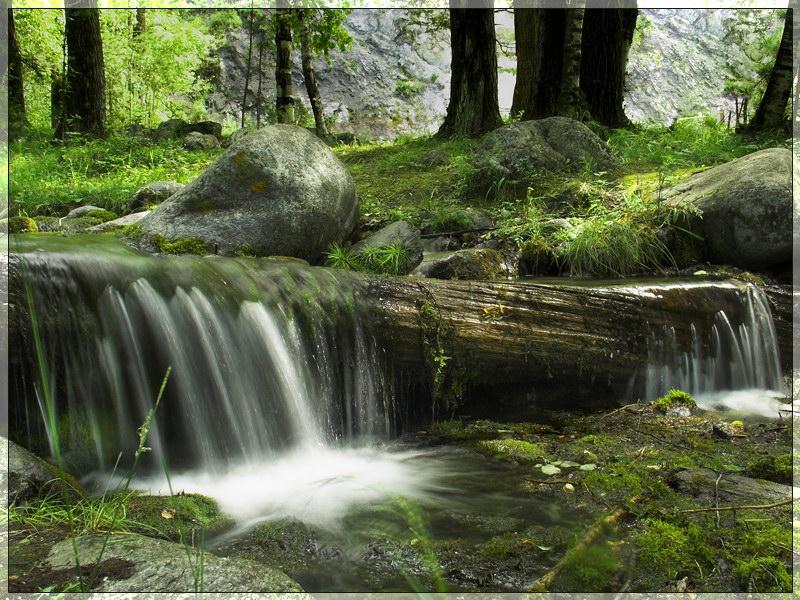 Бурятия, Восточные Саяны, Аршан. Один из ручьев в районе реки Кынгарга. июль 2006 г.