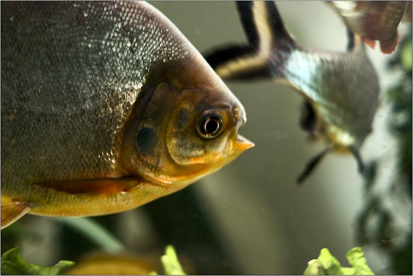 мы - не рыбы,рыбы - нЕмы.)))