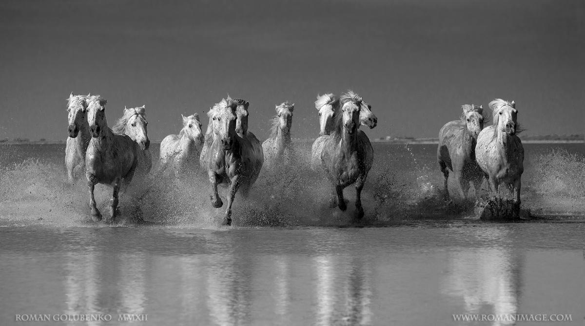 Лошади, они как люди.... несутся неизвестно куда сломя голову. ________Сразу хочу добавить, что лошади натуральные ,а головы лошадей второго плана так там и были во время съемки, хотя и кажутся неестественными *)