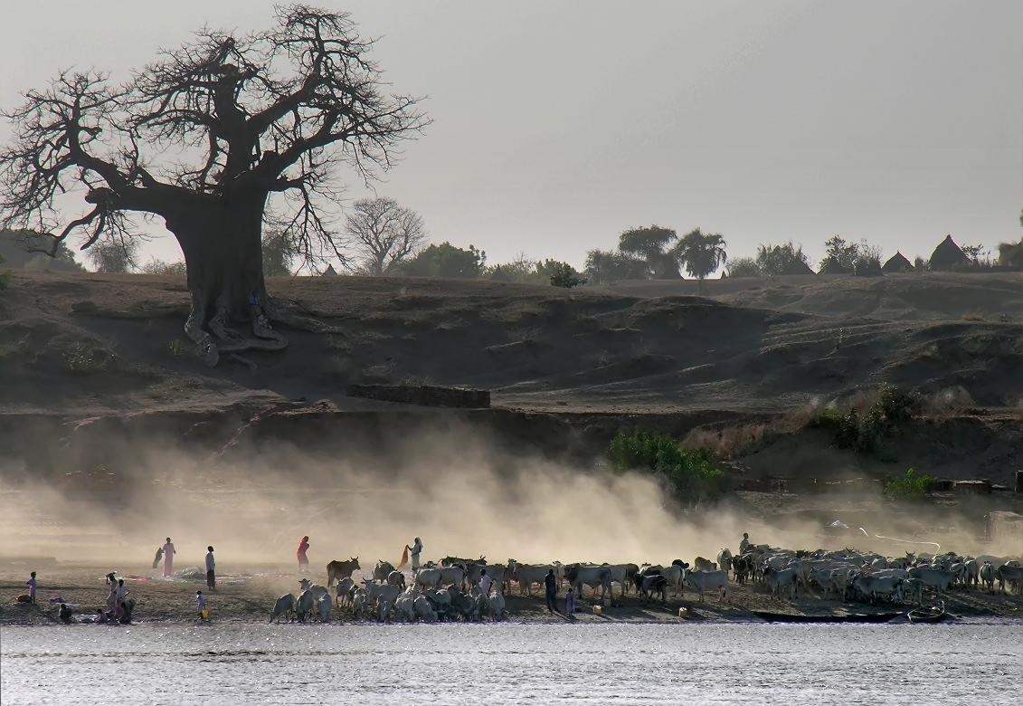 Северный Судан.Восток страны.Река Голубой Нил.
