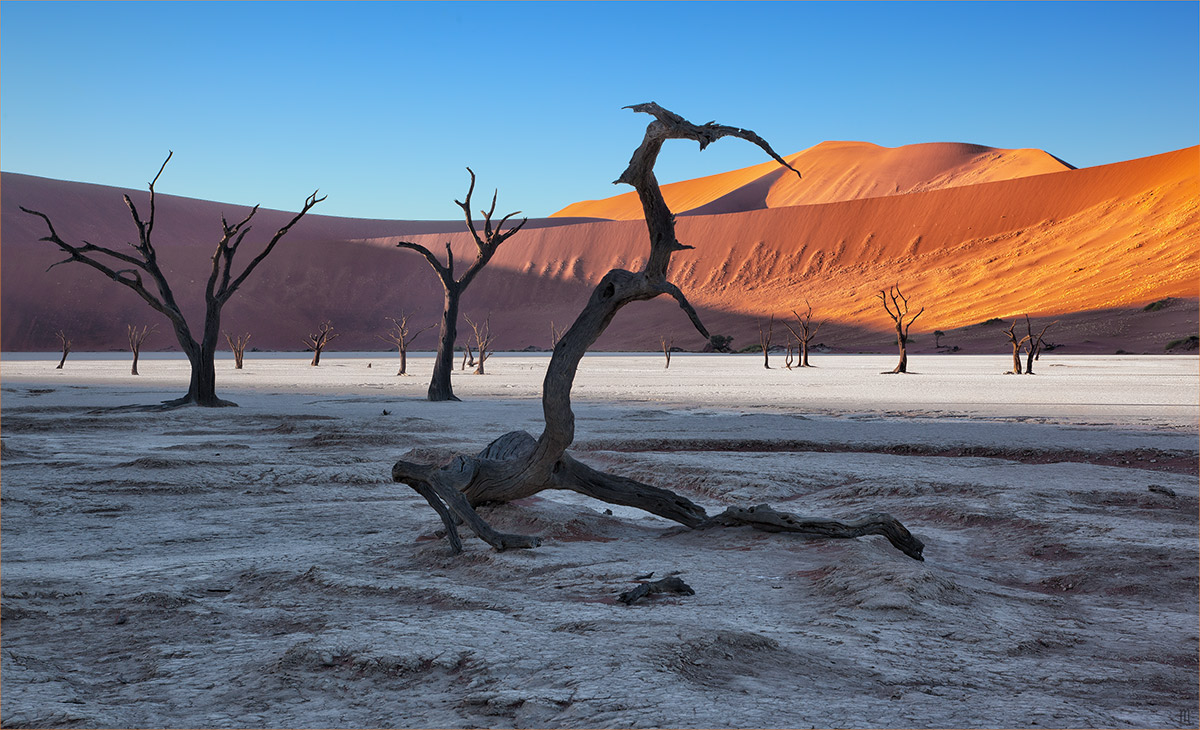 Намибия. Пустыня Намиб. Мертвые акации, засохшие несколько сотен лет тому назад, но не сгнившие из-за сухого воздуха. 6 часов утра.