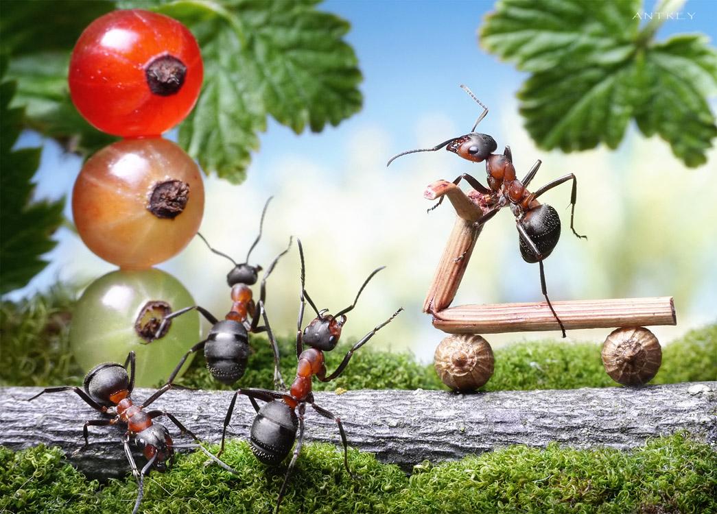 """- Братцы, я не умею тормозить!!!по мотивам рисунка Ясмин """"муравей катается на самокате"""""""