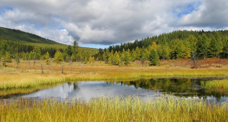 Монголия, озеро Хубсугул. Вокруг озера растет только ель. В связи с этим осенние краски там несколько непривычные, не сибирские ;-)Сентябрь 2006 г.