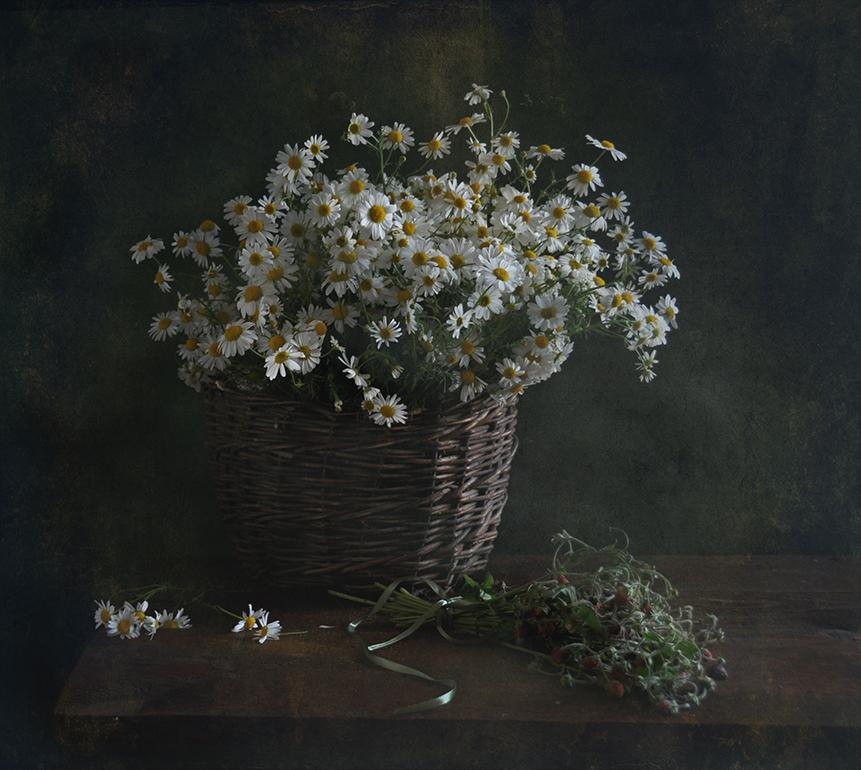 Распустились ромашки на поле,Много – много красивых цветов.И колышется белое море –Как мечта из несбыточных снов!Как хочу я в него окунуться.В них упасть и на небо смотреть.И от счастья в душе улыбнуться.Сердцем в небо, как птица лететь!Ах, ромашки! Цветы луговые –Золотисто-белый дурман…Вы как души чьи-то святые,Как целительный сердцу бальзам!..