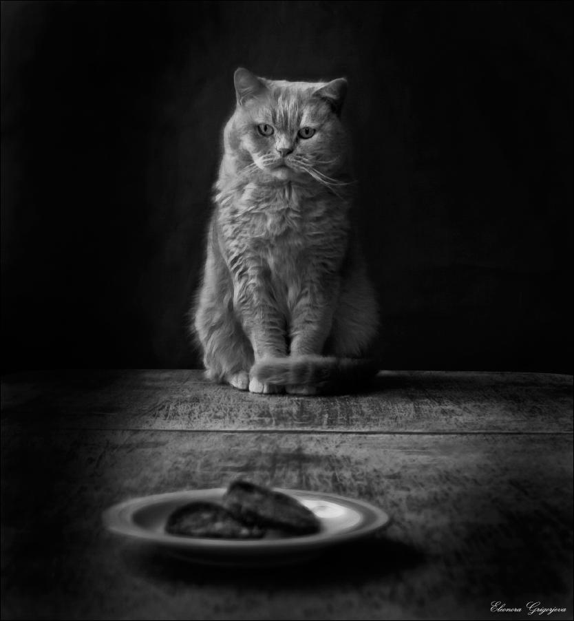 В роли кота - Кот. В реальной жизни Кот не ест колбасу, поэтому при съёмках не пострадал))